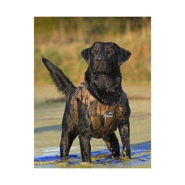 Dokkens Hundevest Neopren